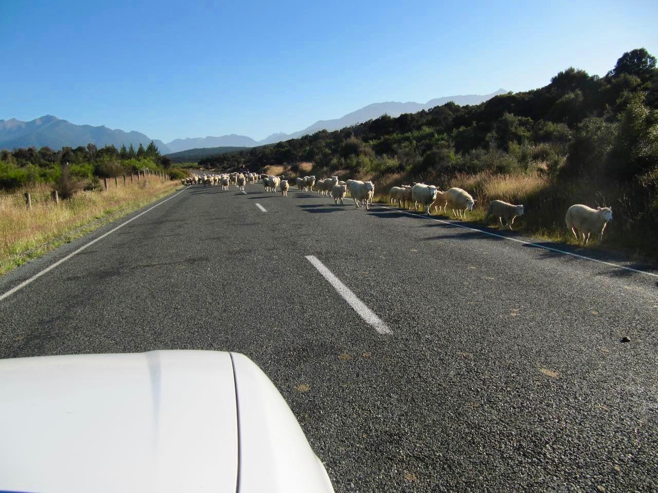 road-trip-newzealand