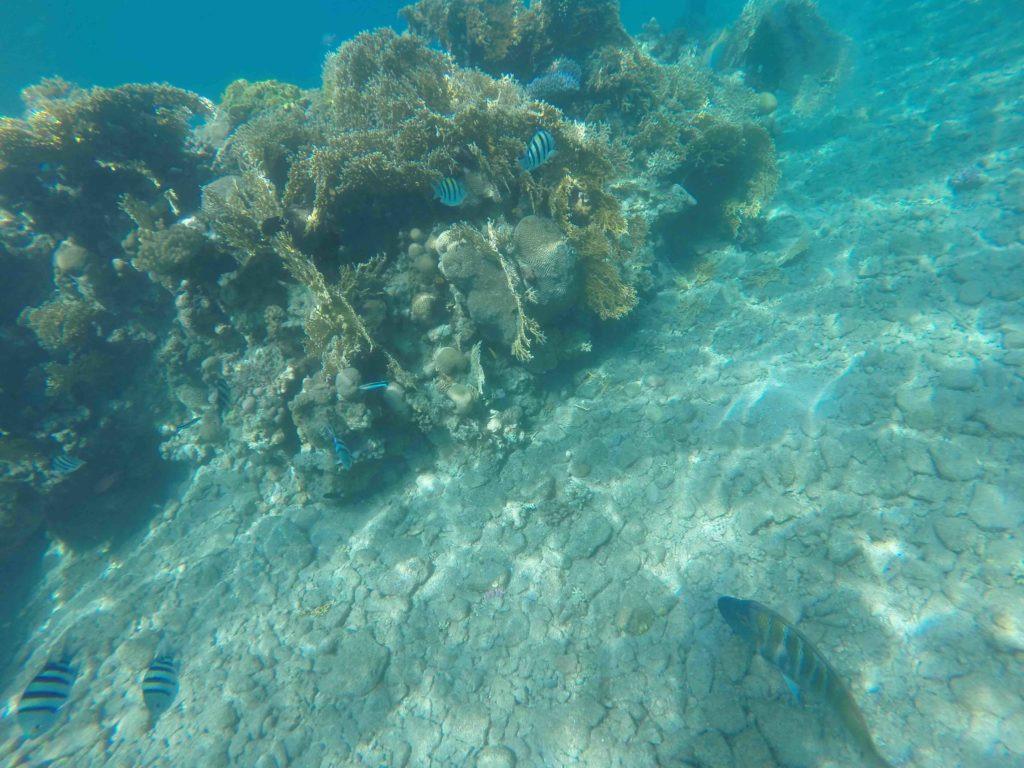 Snorkeling at Princess Beach in Eilat in Israel was beautiful
