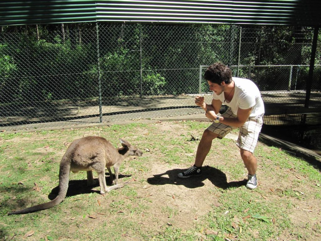 KANGAROO FIGHTING HUMAN 1