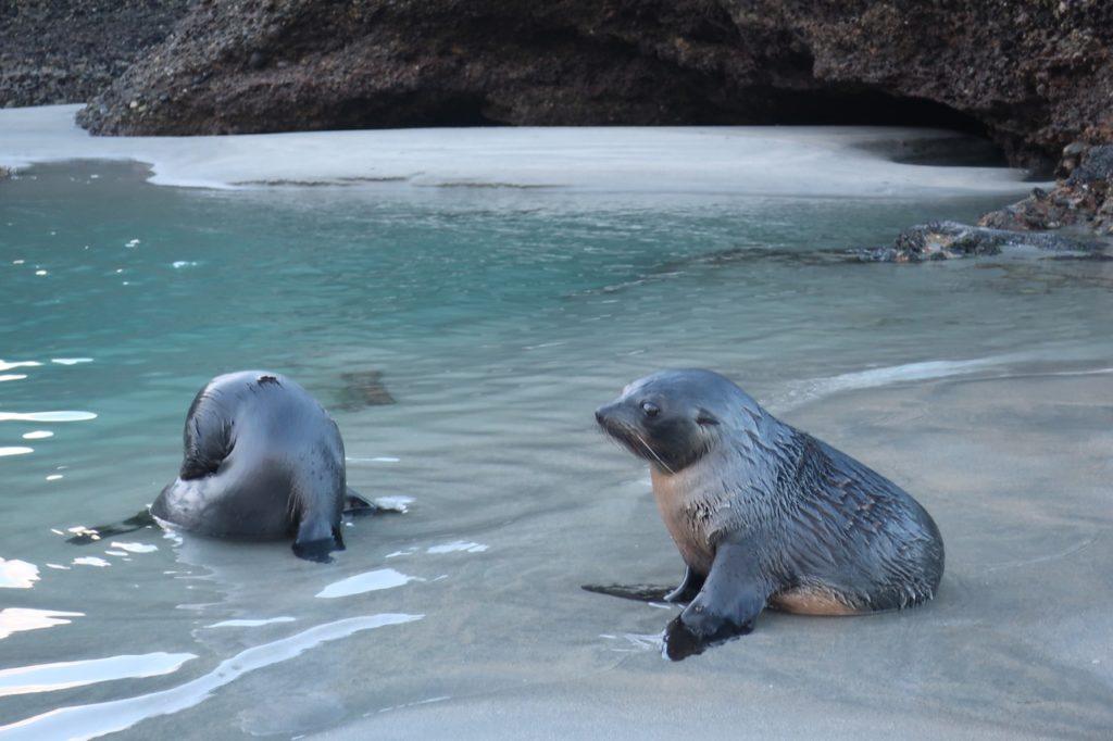 Amazing creatures in Golden Bay