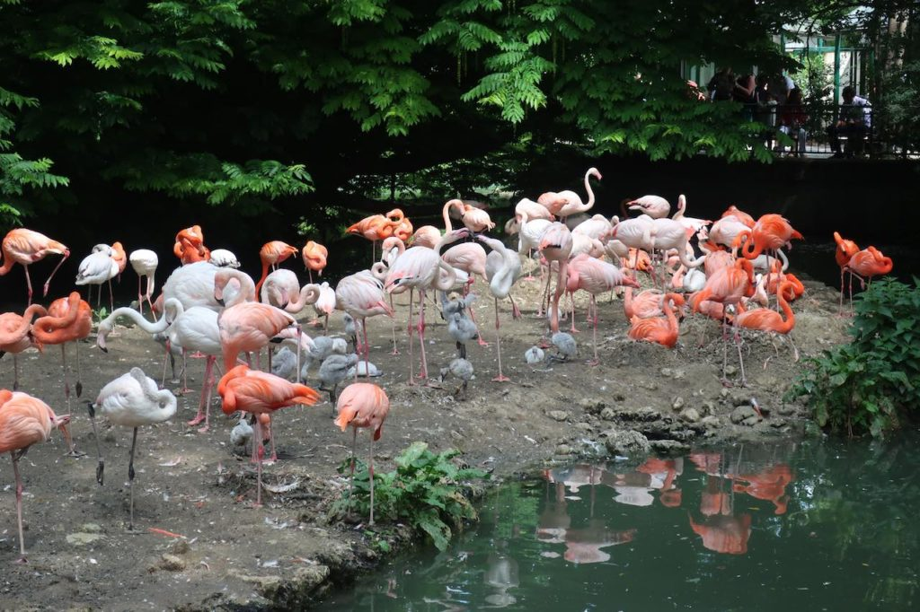 Beautiful Birds in Munich Zoo