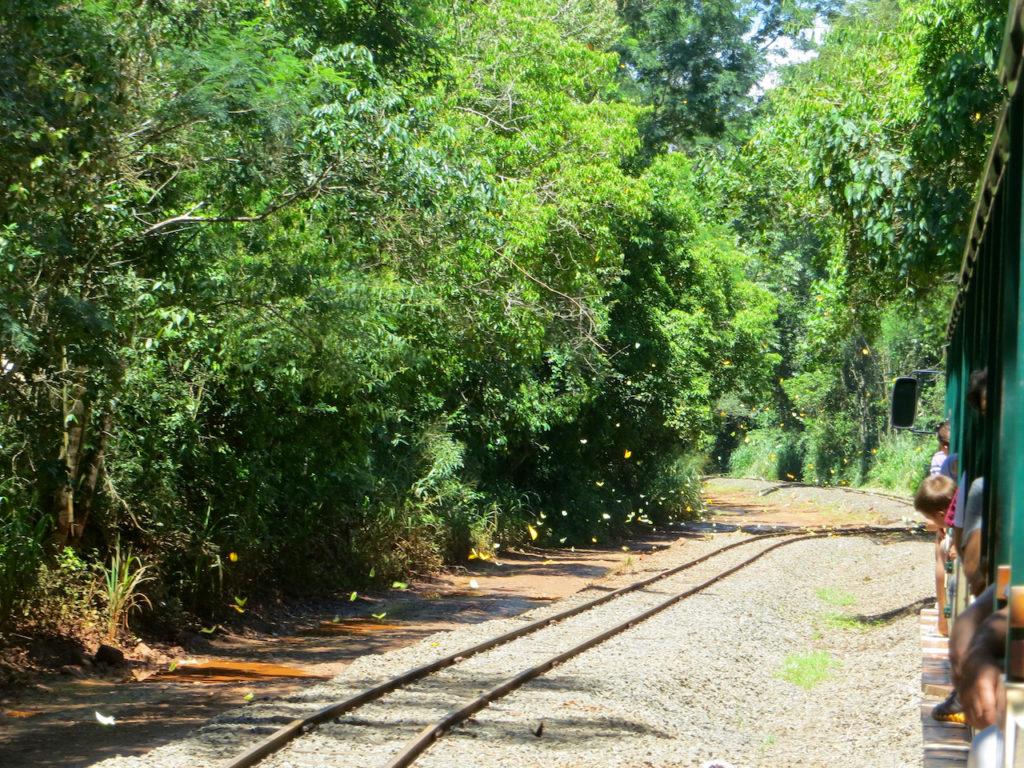 A TRAIN LINE IN FOREST